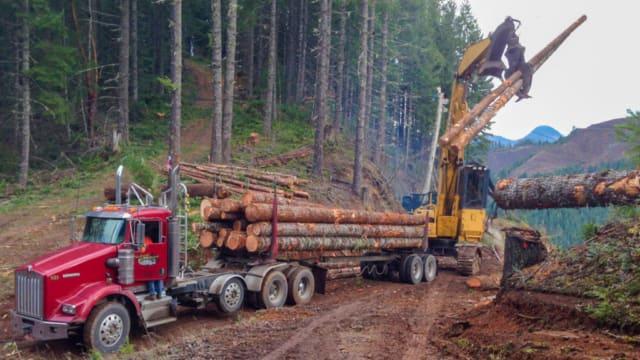 Timber Harvest Benefits