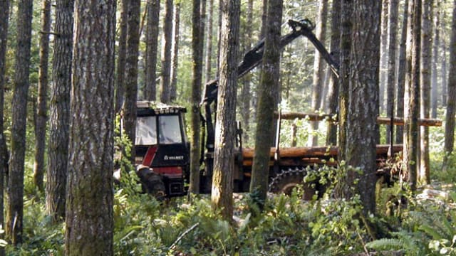 Maintaining a Healthy Forest